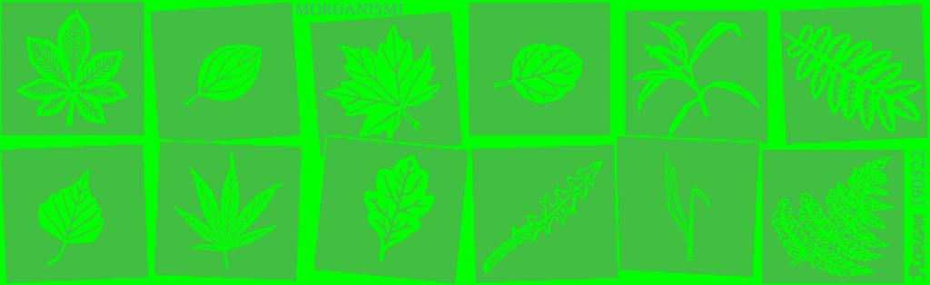 Morgsarja20190522