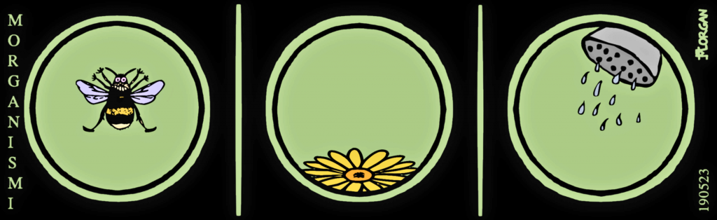 Morgsarja20190523